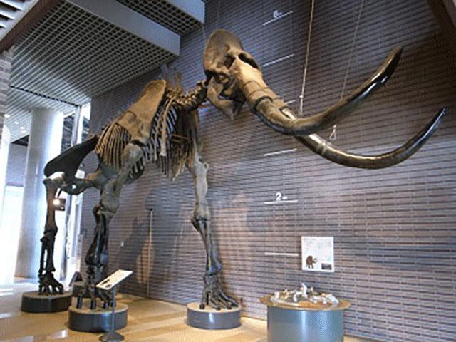 Ibaraki Nature Museum